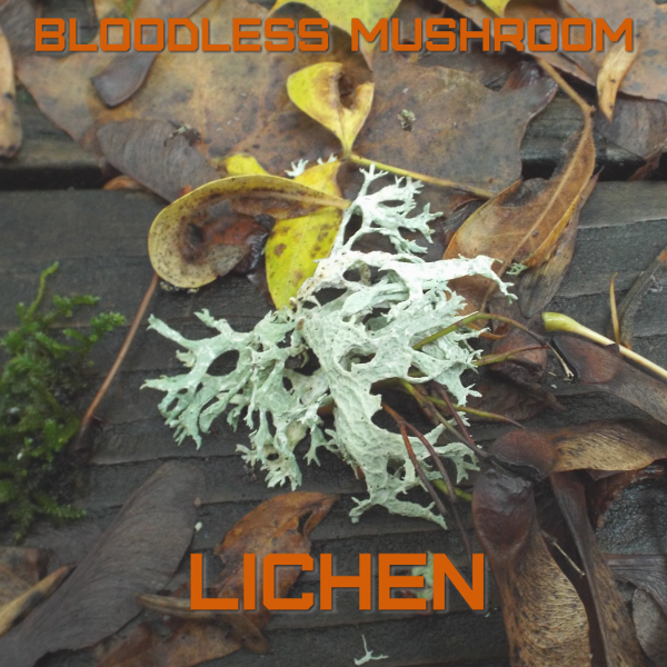 Lichen by Bloodless Mushroom Album Cover